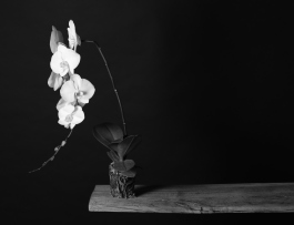 3) Nature Morte (Still Life with Orchid and Sound)